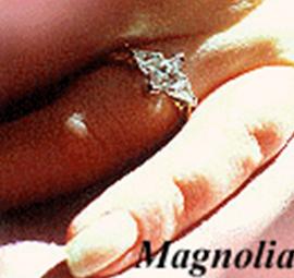 Magnolia481