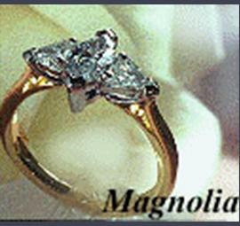 Magnolia482